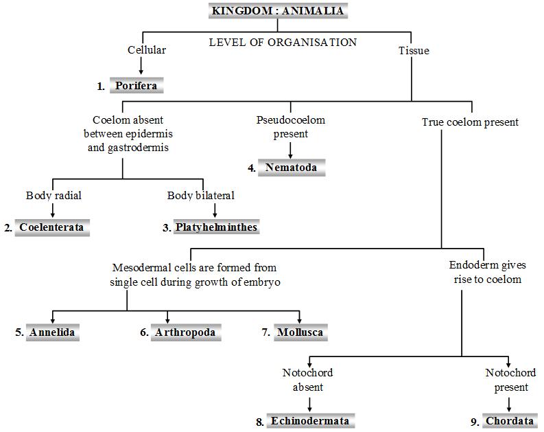 What are the Characteristics of the Kingdom Animalia - A Plus Topper