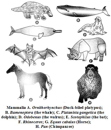 What are the Characteristics of the Kingdom Animalia 18