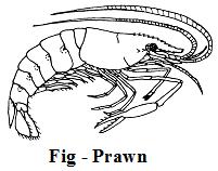What are the Characteristics of the Kingdom Animalia 7