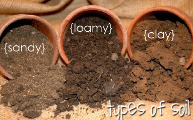 How many different types of soil are there a plus topper for Pictures of different types of soil with their names