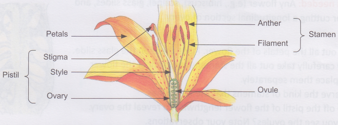 How Does A Flowering Plant Reproduce A Plus Topper