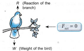 What Are The Effects Of Force On An Object 4