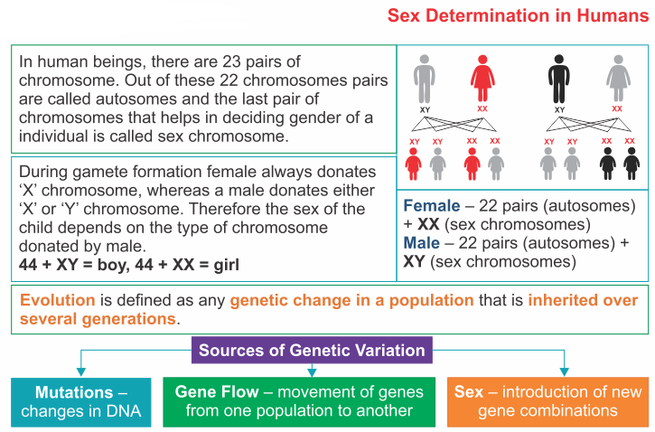 sex determination and sex chromosomes quizlet website in Stamford