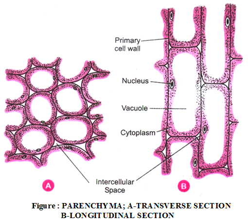 What are the types of plant tissues and their functions 3