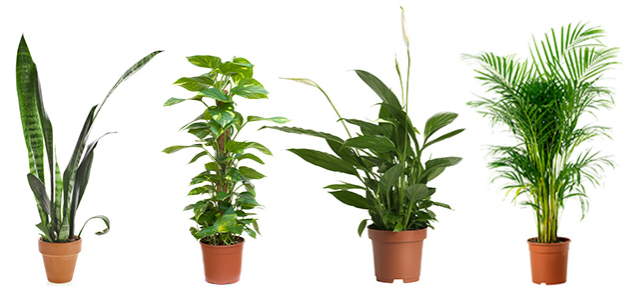 Air pollution linked to learning and memory problems a for Indoor plants for better air quality