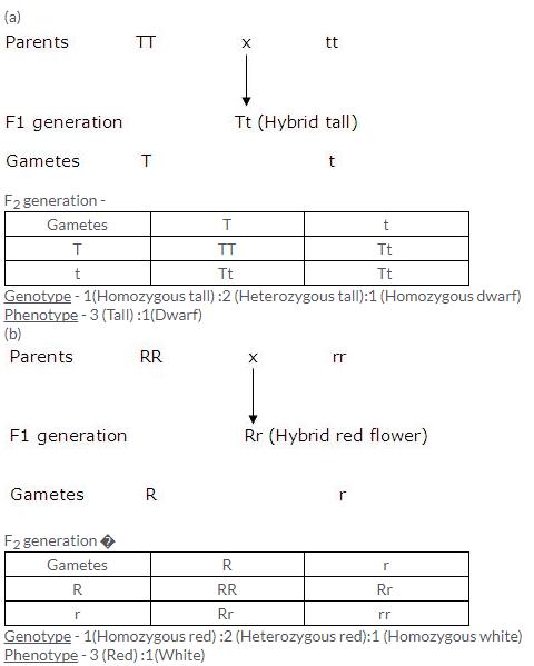 Selina Concise Biology Class 10 ICSE Solutions Genetics Some Basic Fundamentals image - 3