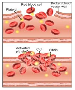 Selina Concise Biology Class 10 ICSE Solutions The Circulatory System image -1