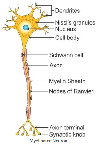 Selina Concise Biology Class 10 ICSE Solutions The Excretory System (Elimination of Body Wastes) image - 1