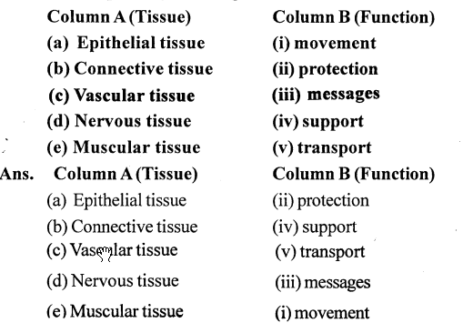 Selina Concise Biology Class 7 ICSE Solutions - Plant And Animal Tissues 2