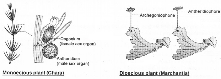 Plus Two Botany Notes Chapter 1 Reproduction in Organisms 7