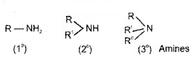 Plus Two Chemistry Notes Chapter 13 Amines 1