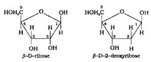 Plus Two Chemistry Notes Chapter 14 Biomolecules 18