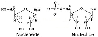 Plus Two Chemistry Notes Chapter 14 Biomolecules 19