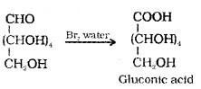 Plus Two Chemistry Notes Chapter 14 Biomolecules 5