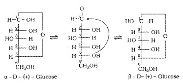 Plus Two Chemistry Notes Chapter 14 Biomolecules 9