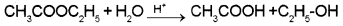 Plus Two Chemistry Chapter Wise Questions and Answers Chapter 4 Chemical Kinetics 3M Q8.1