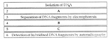 Plus Two Zoology Chapter Wise Questions and Answers Chapter 4 Molecular Basis of Inheritance 3M Q15
