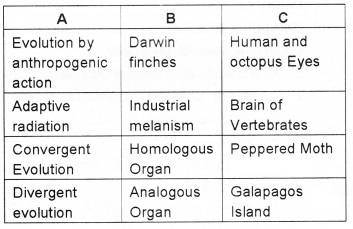 Plus Two Zoology Chapter Wise Questions and Answers Chapter 5 Evolution 3M Q5