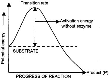 Plus One Zoology Chapter Wise Questions and Answers Chapter 4 Biomolecules 2M Q28