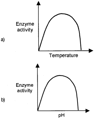 Plus One Zoology Chapter Wise Questions and Answers Chapter 4 Biomolecules 2M Q29