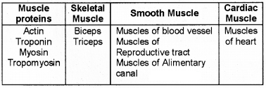 Plus One Zoology Chapter Wise Questions and Answers Chapter 9 Locomotion and Movement 2M Q16