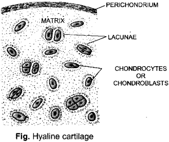ISC Class 12 Biology Previous Year Question Papers Solved 2012 2