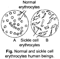 ISC Class 12 Biology Previous Year Question Papers Solved 2015 1
