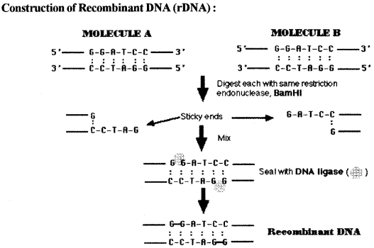 ISC Biotechnology Question Paper 2010 Solved for Class 12 2