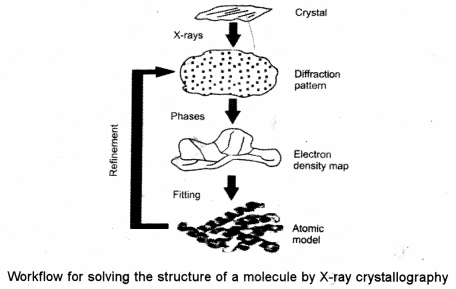 ISC Biotechnology Question Paper 2014 Solved for Class 12 2