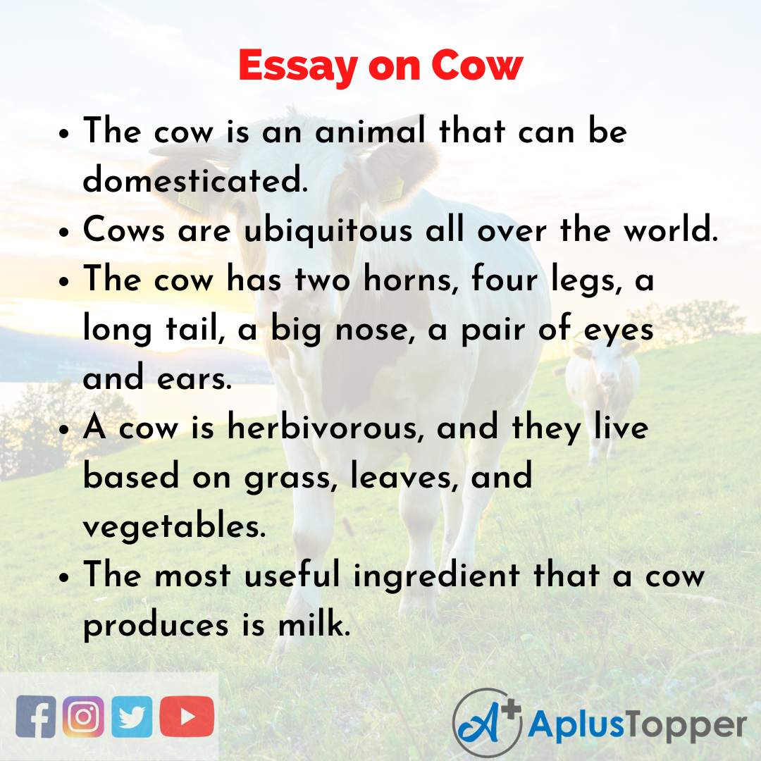 Essay about Cow