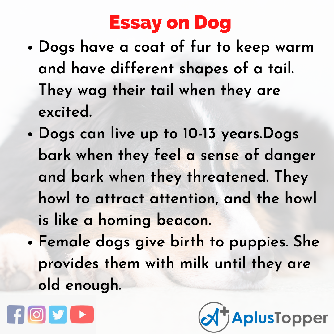Essay about Dog