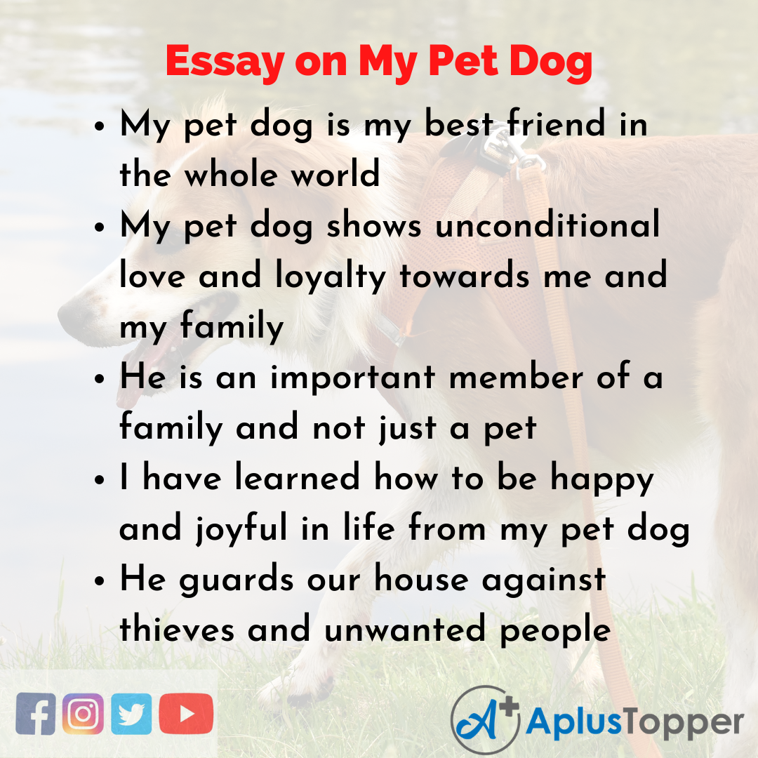 Essay about My Pet Dog