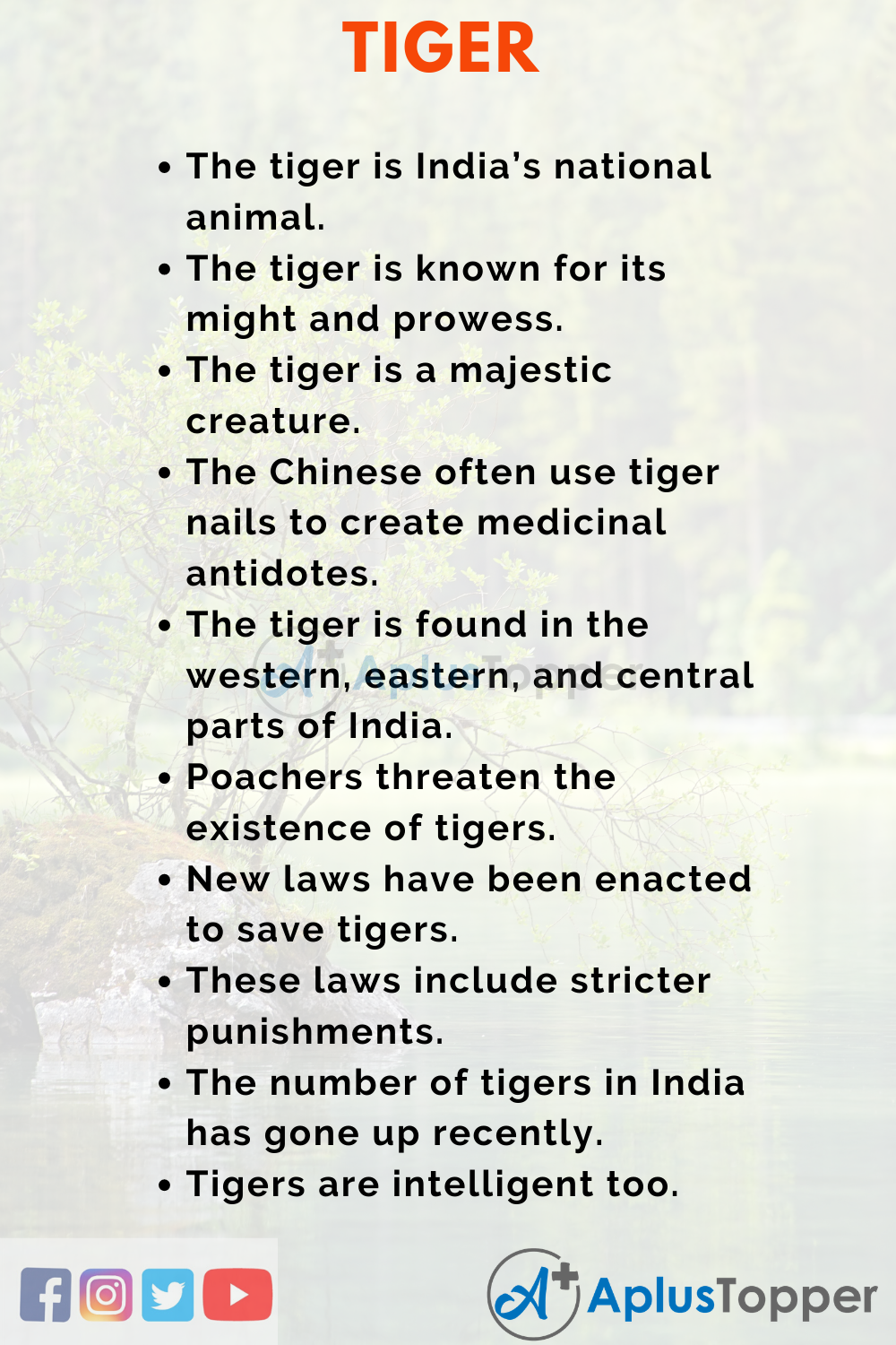 Essay about Tiger