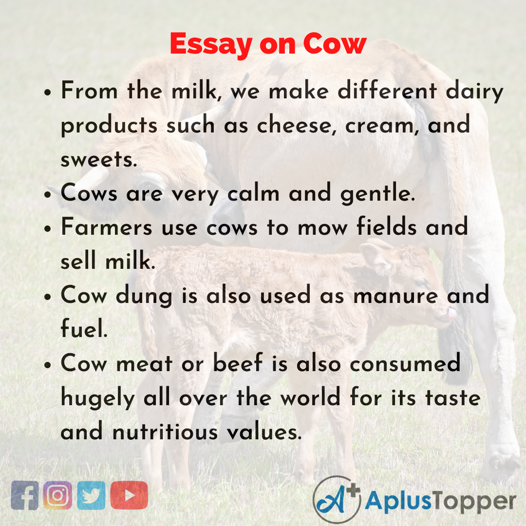 Essay for Cow