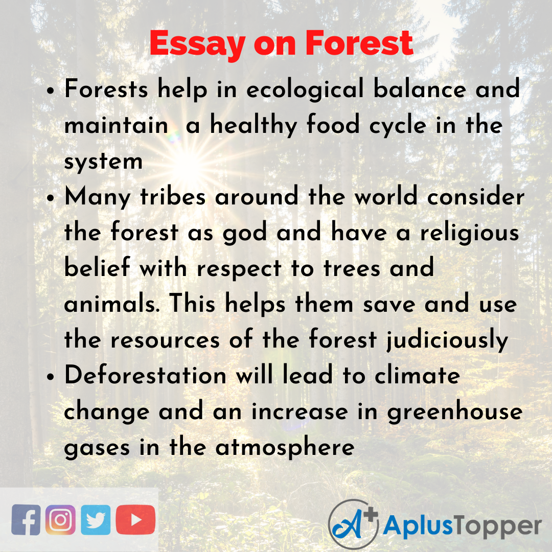 Essay for Forest