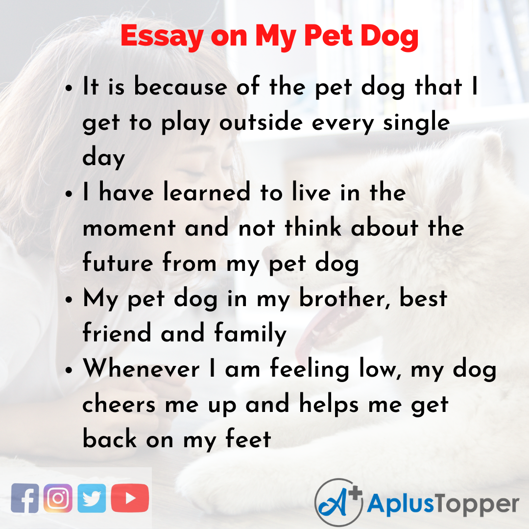 Essay for My Pet Dog