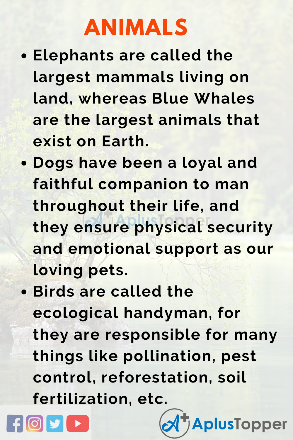 Esssay about Animals