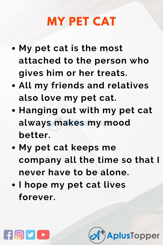 Essay About My Pet Cat