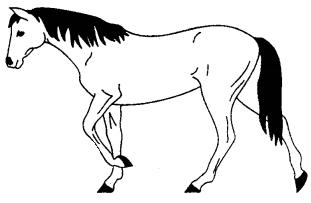 The Horse Essay