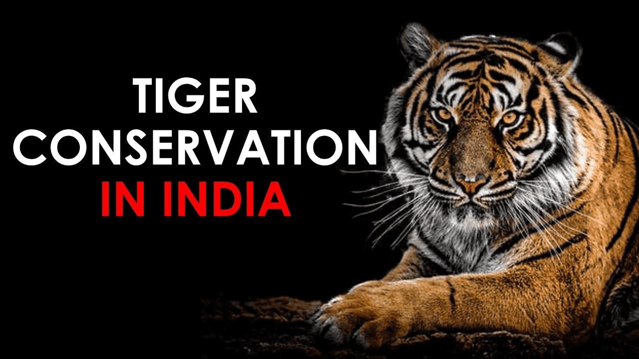 Tiger Conservation Essay