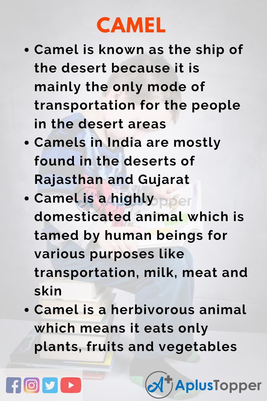 10 Lines on Camel for Kids