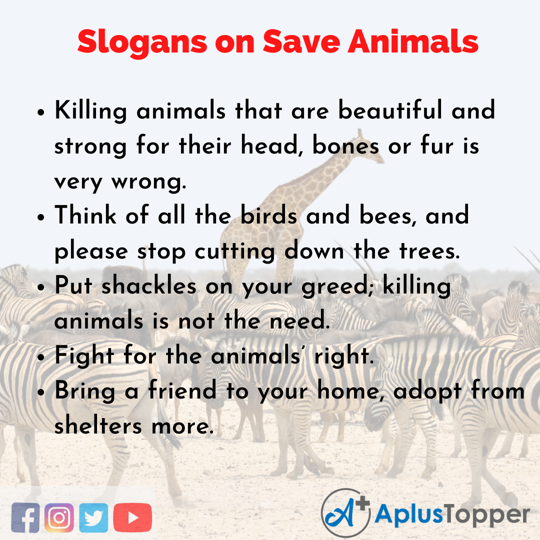 5 Save Animals Slogans in English