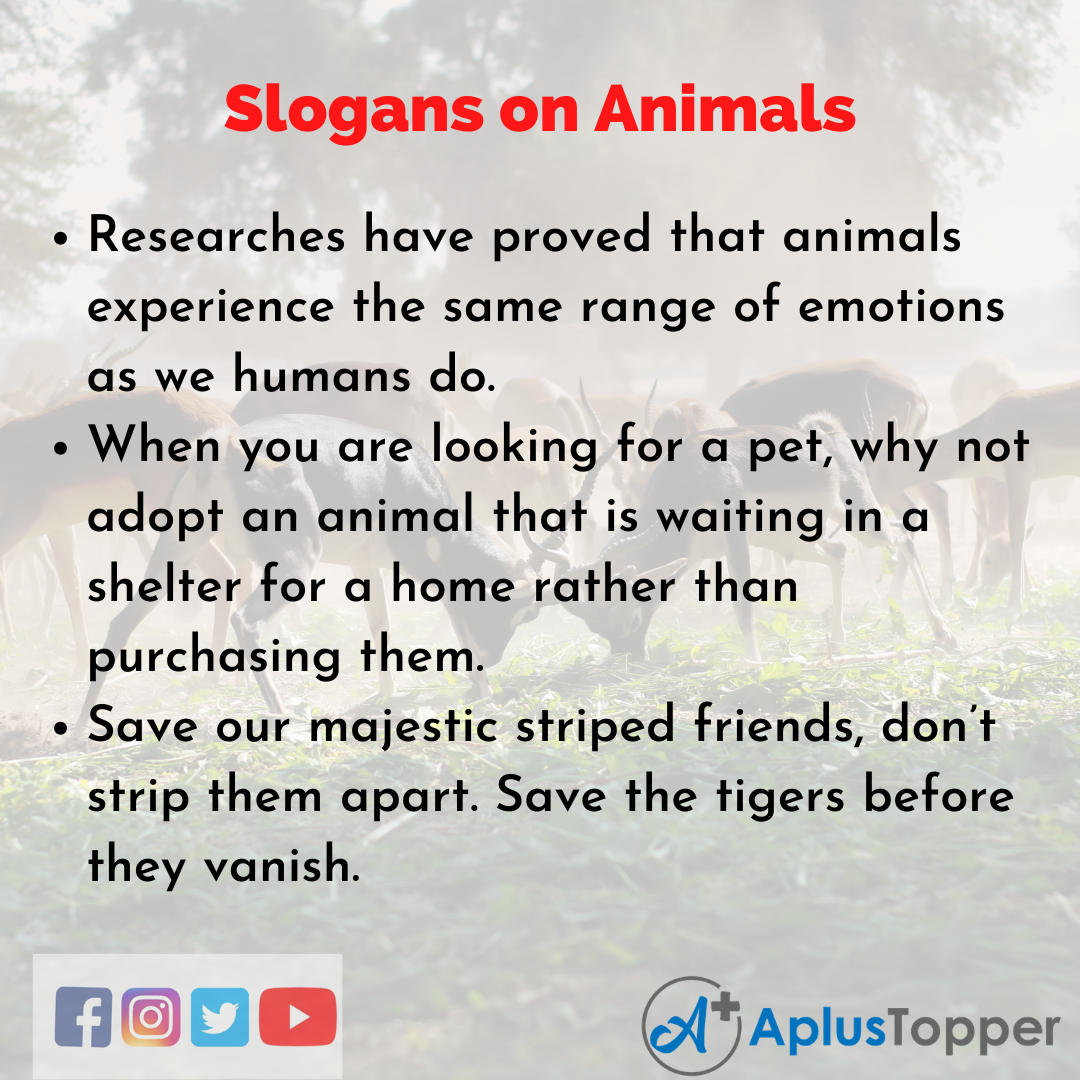 5 Slogans on Animals in English