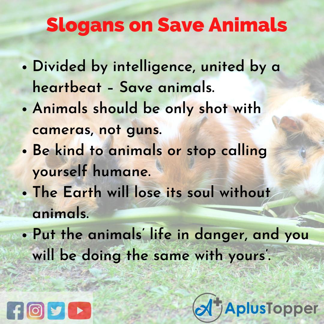 Save Animals Slogans in English