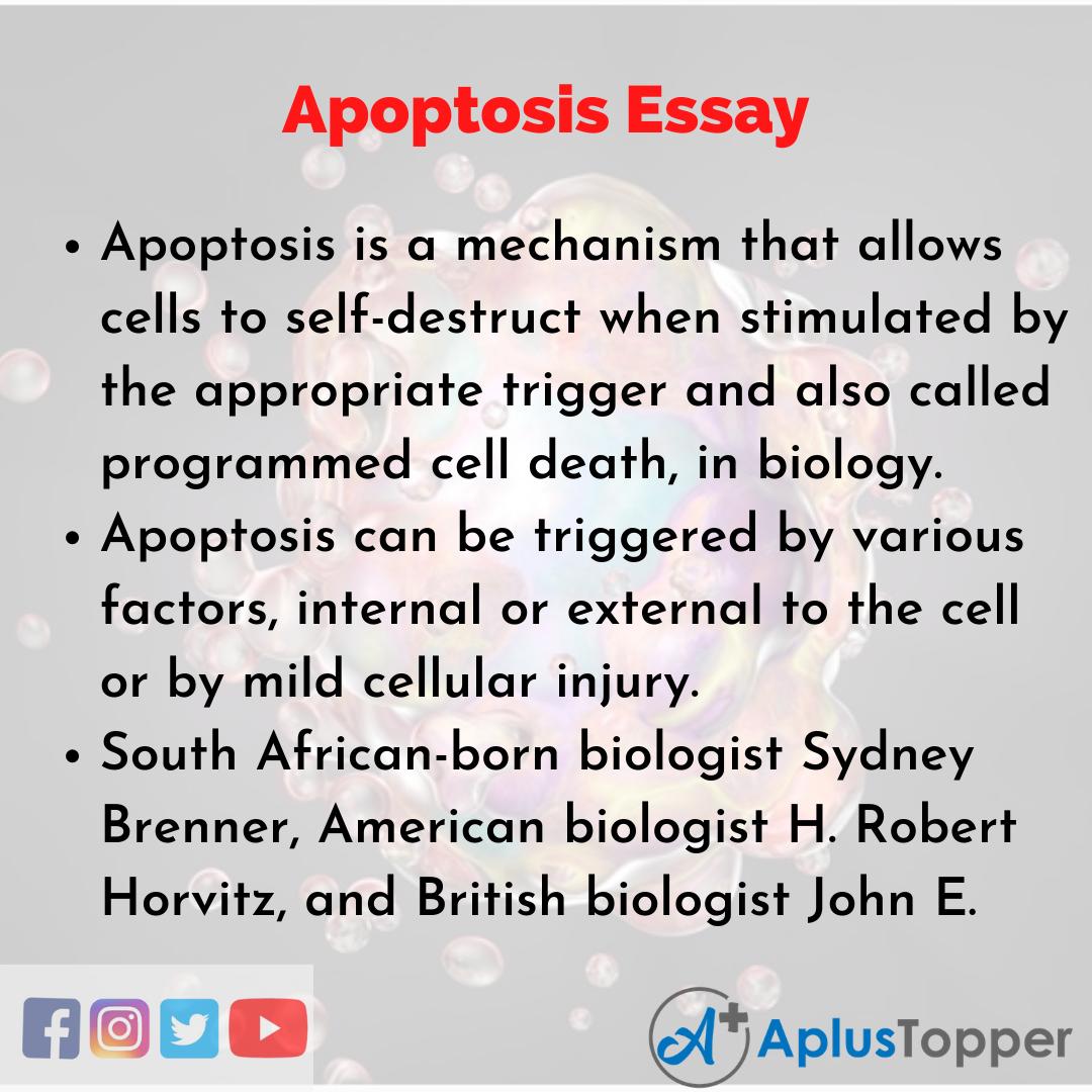 Essay on Apoptosis