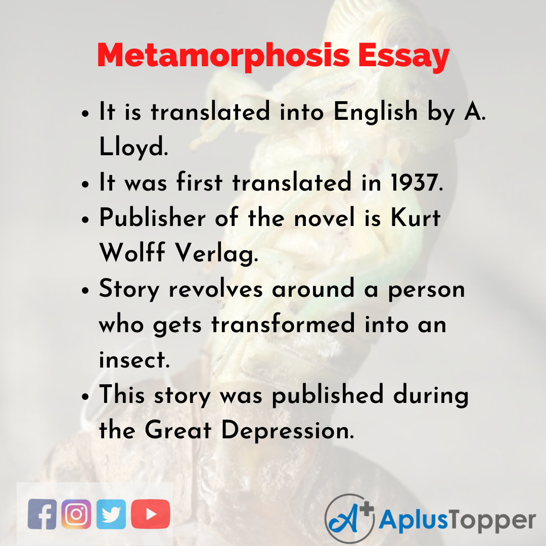 Essay on Metamorphosis