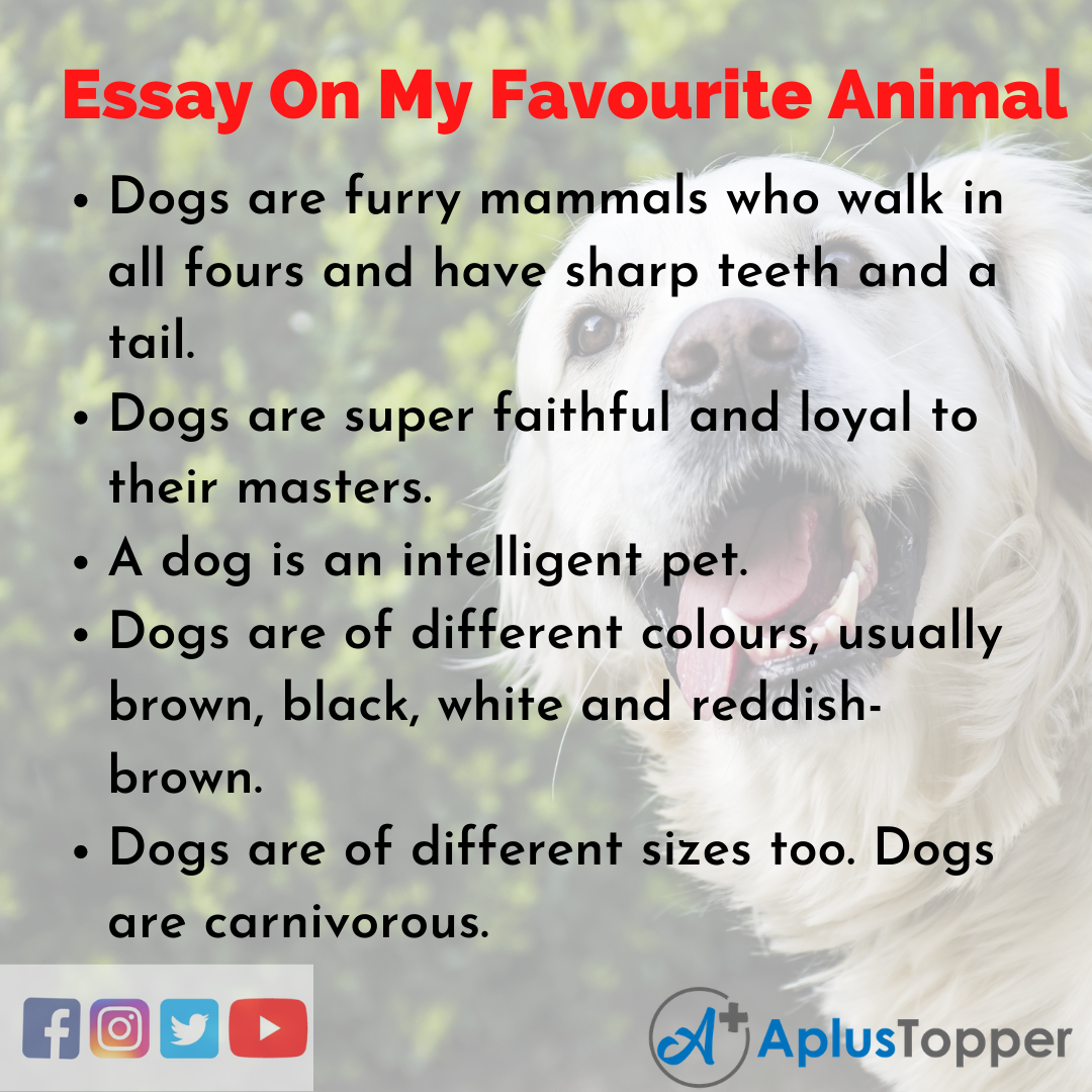 Essay About My Favourite Animal