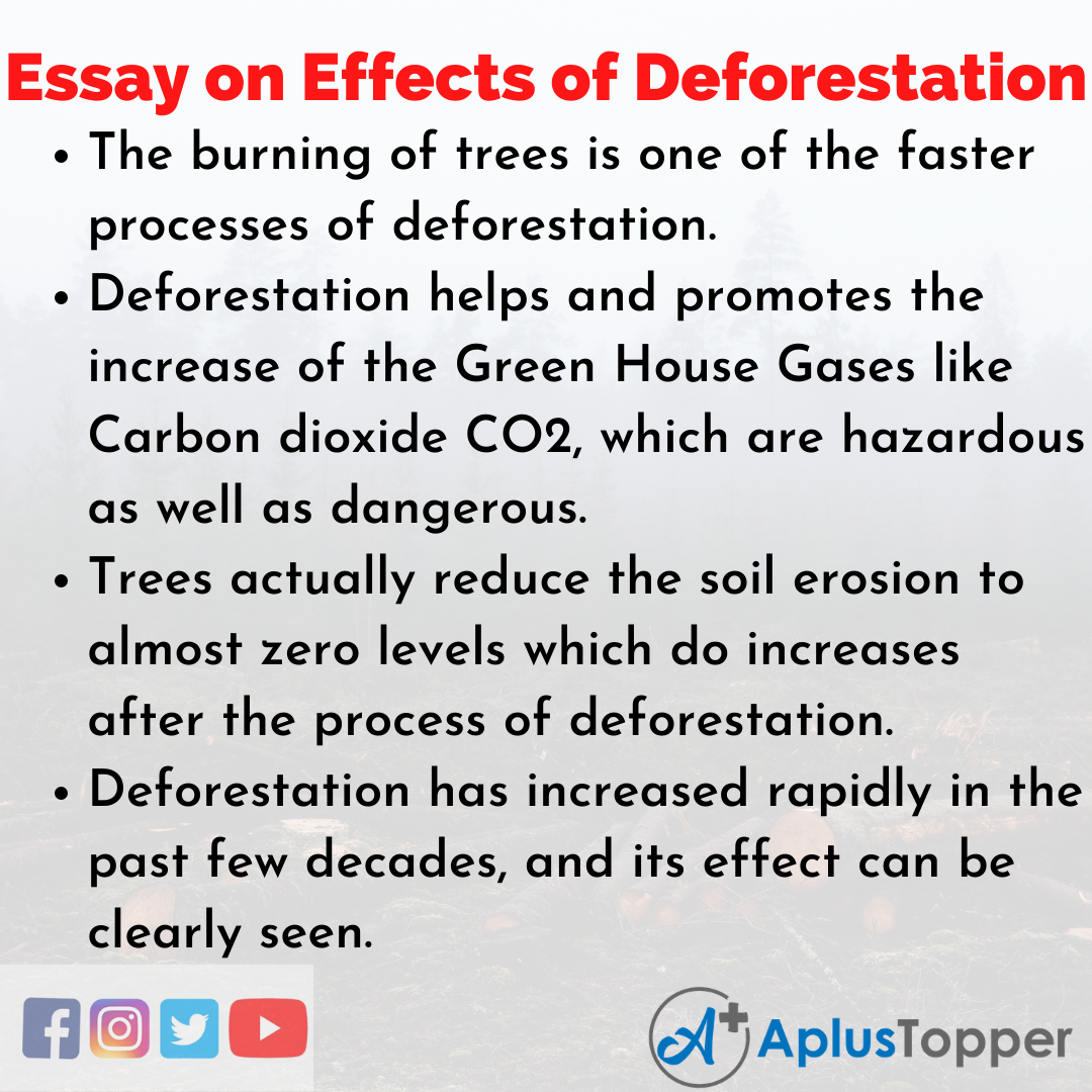 Essay about Effects of Deforestation