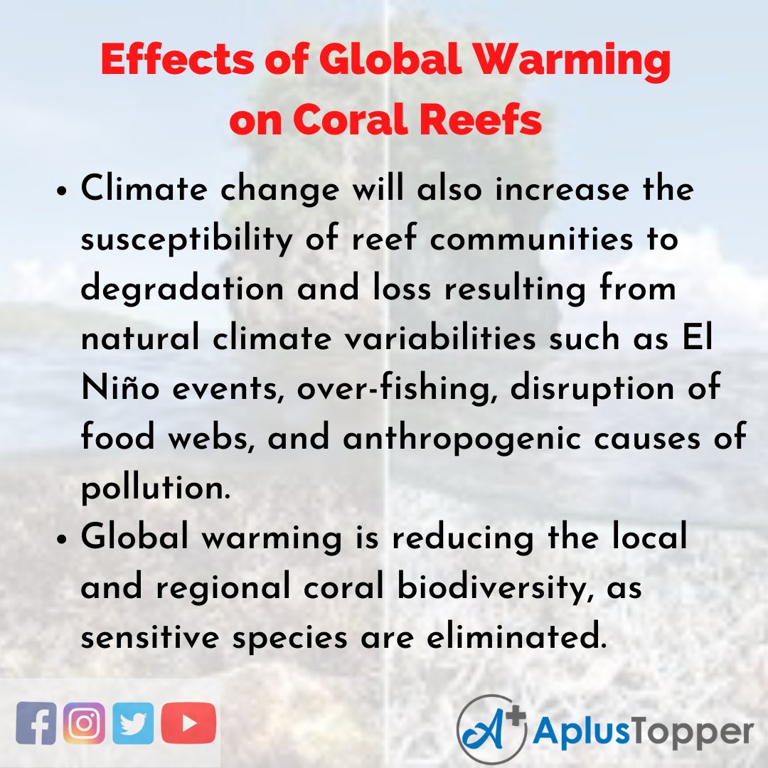 Essay about Effects of Global Warming on Coral Reefs