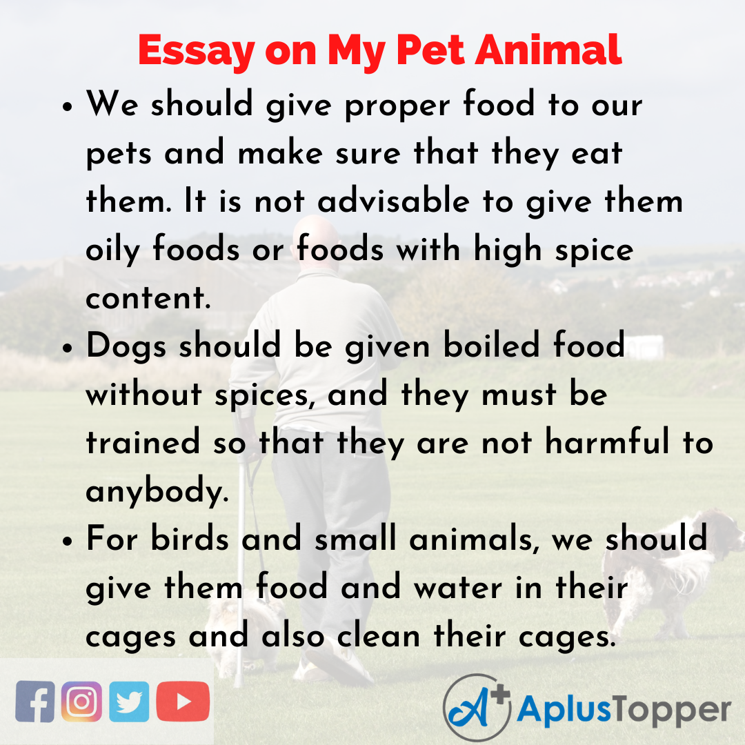 Essay for My Pet Animal